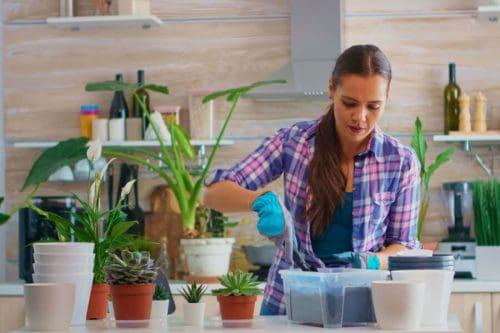 5 espécies de plantas para casa